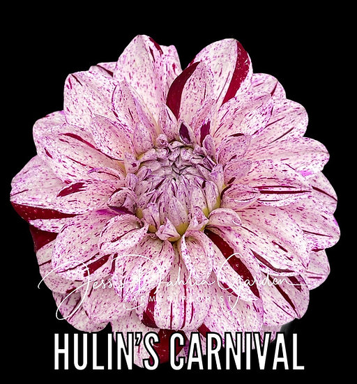 Hulin's Carnival