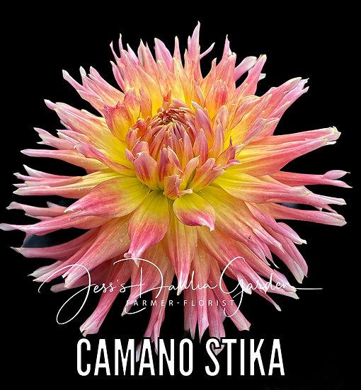 Camano Sitka