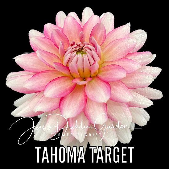Tahoma Target