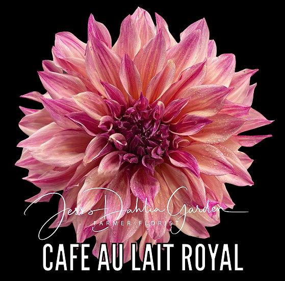 Cafe Au Lait Royal