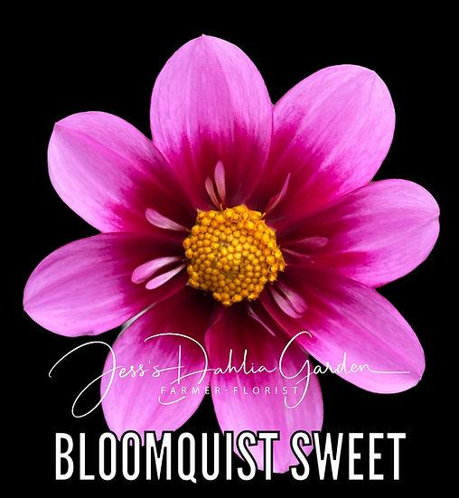 Bloomquist Sweet