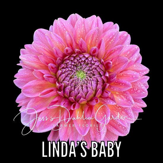 Linda's Baby