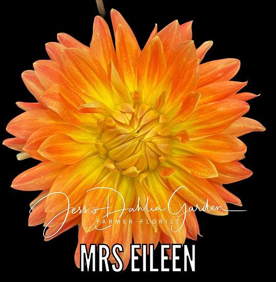 Mrs Eileen
