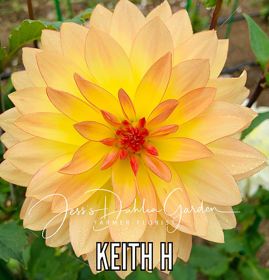 Keith H