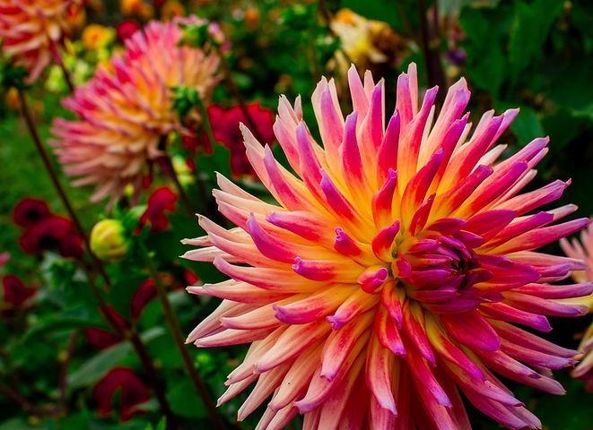 pink%2520and%2520white%2520flower%2520in%2520tilt%2520shift%2520lens_edited_edited.jpg