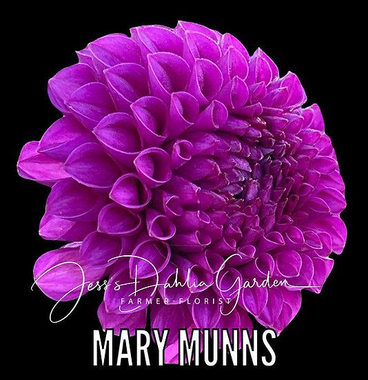 Mary Munns