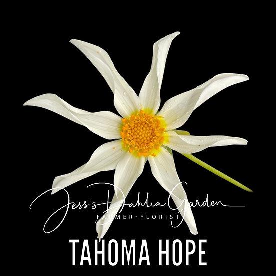 Tahoma Hope