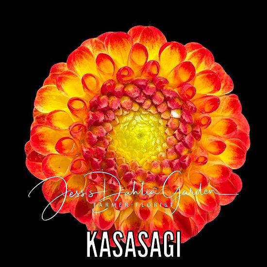 Kasasagi