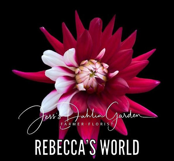 Rebecca's World
