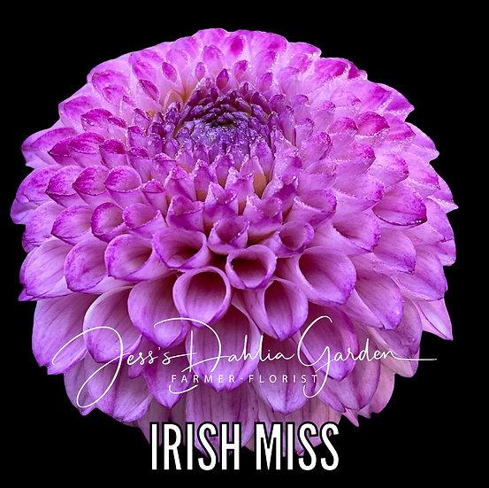 Irish Miss