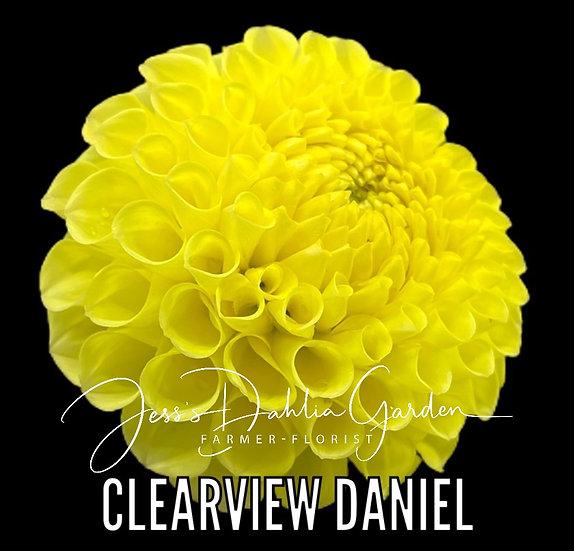 Clearview Daniel