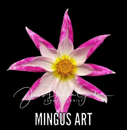 Mingus Art