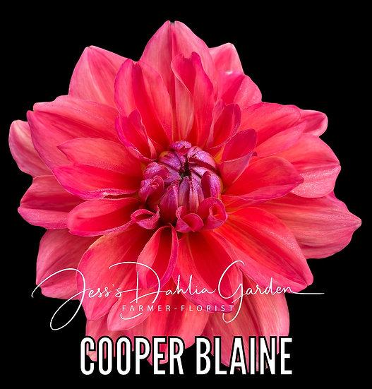 Cooper Blaine
