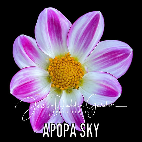 Apopa Sky