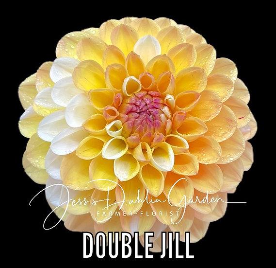 Double Jill