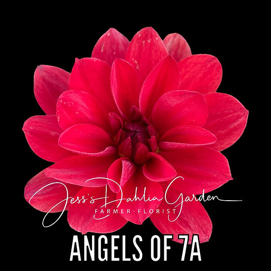 Angels of 7A