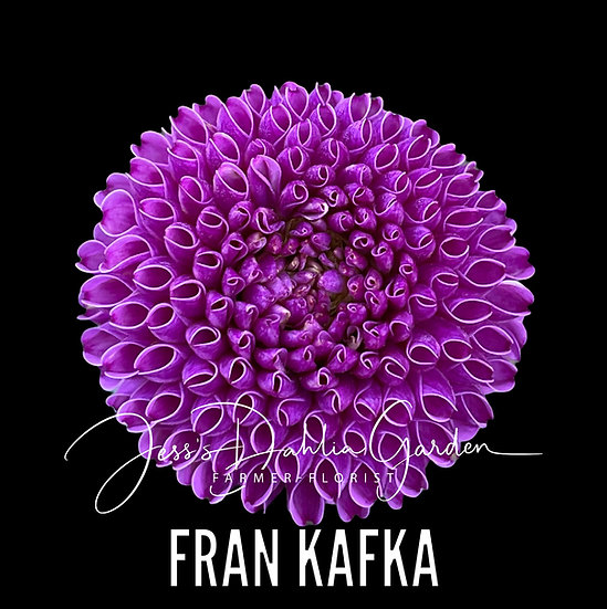 Fran Kafka
