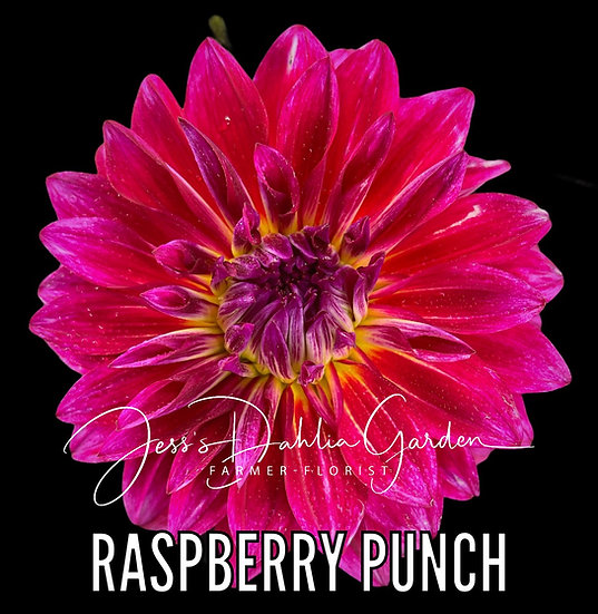 Raspberry Punch