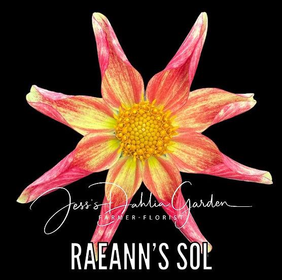 RaeAnn's Sol