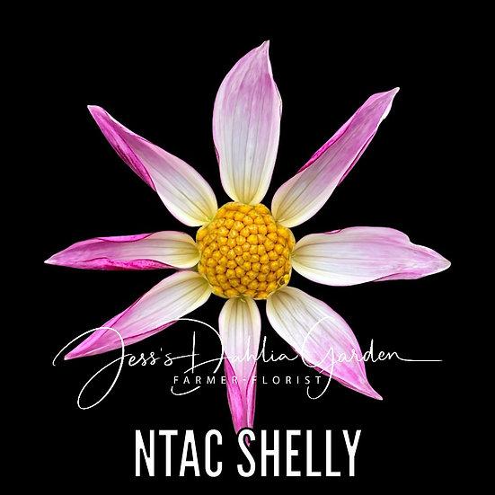 NTAC Shelly