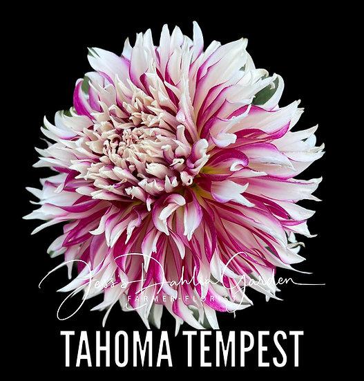 Tahoma Tempest