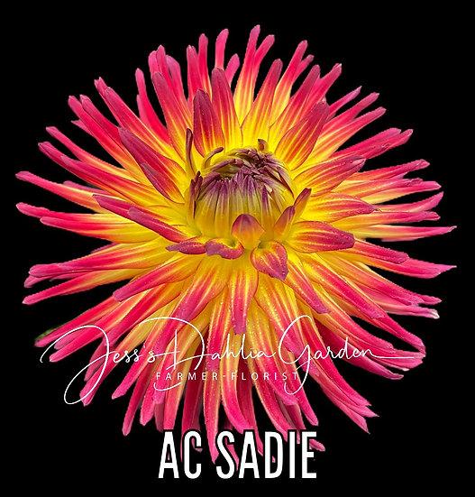 AC Sadie