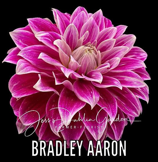 Bradley Aaron