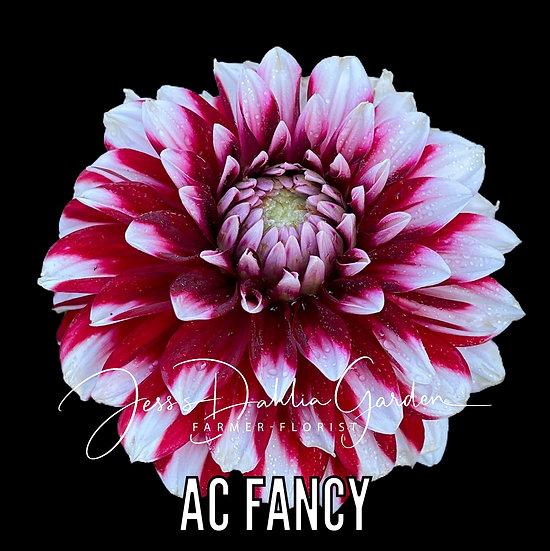 AC Fancy