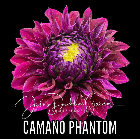 Camano Phantom