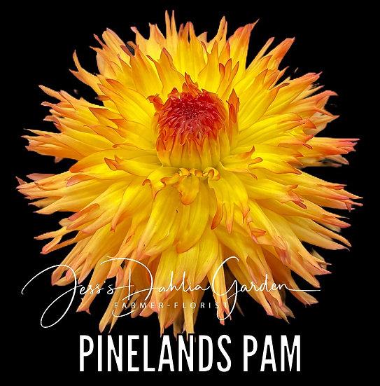 Pinelands Pam