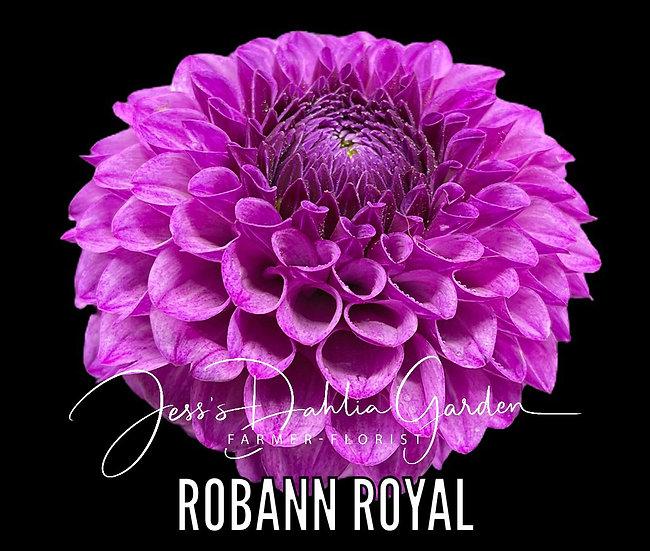 RobAnn Royal