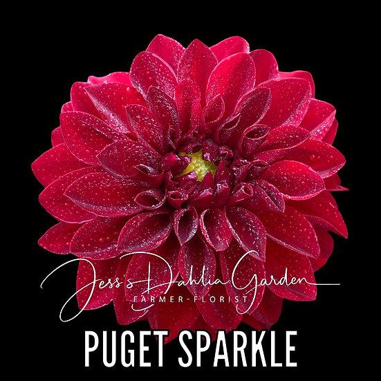 Puget Sparkle