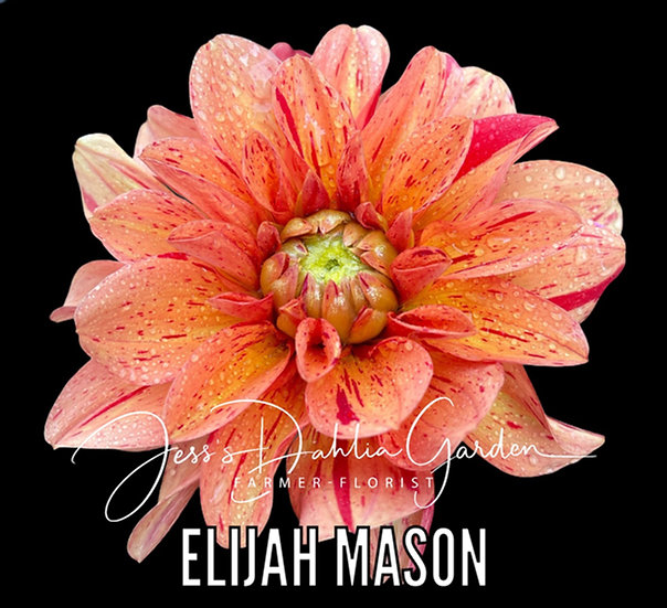 Elijah Mason