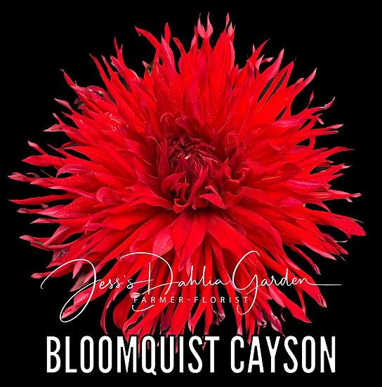 Bloomquist Cayson S