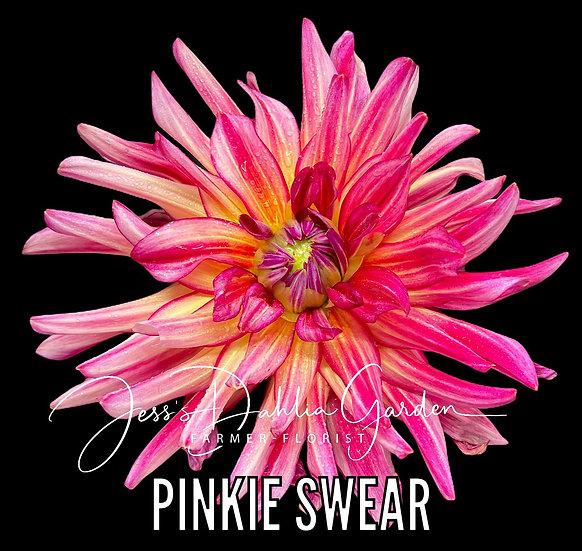 Pinkie Swear
