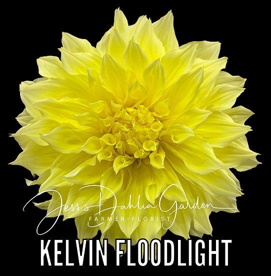 Kelvin Floodlight