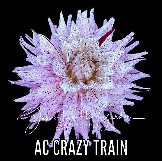 AC Crazy Train