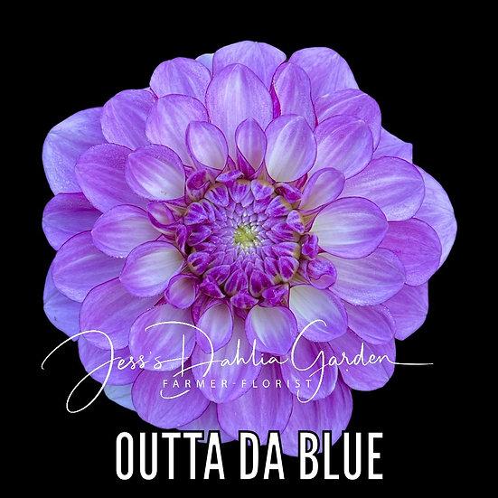 Outta Da Blue