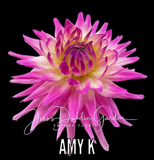 Amy K