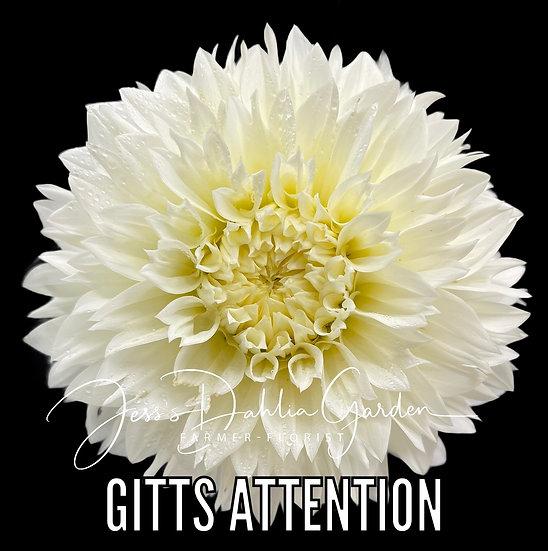 Gitts Attention