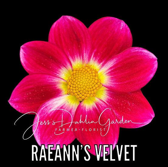 RaeAnn's Velvet