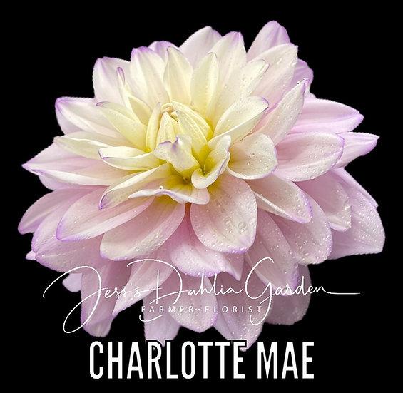 Charlotte Mae