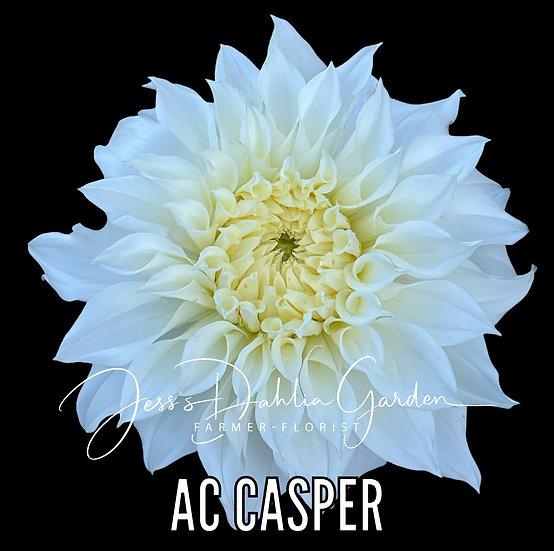 AC Casper