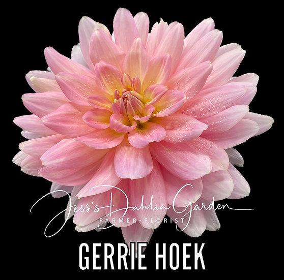 Gerrie Hoek