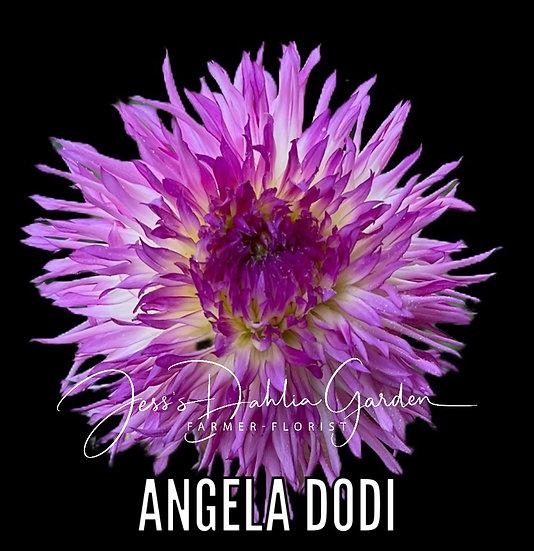 Angela Dodi