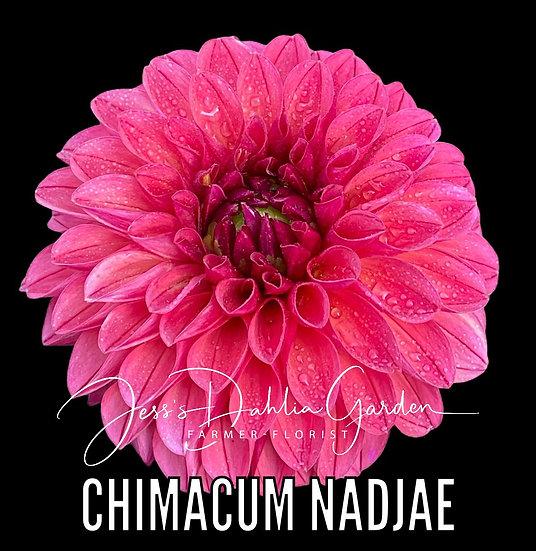 Chimacum Nadjae