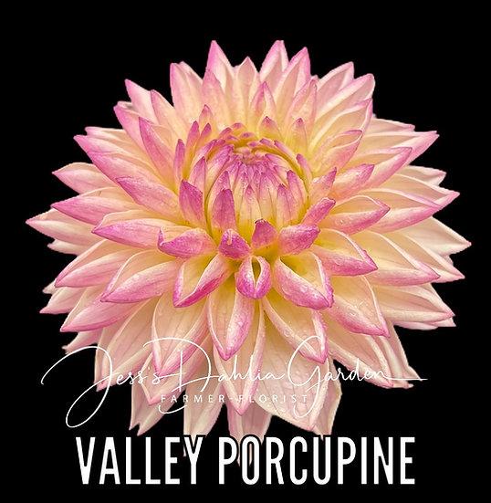 Valley Porcupine