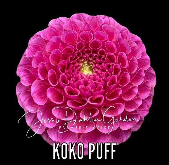 Koko Puff