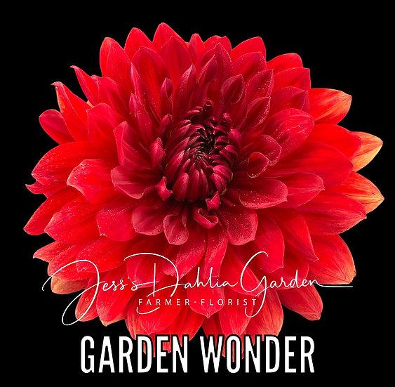 Garden Wonder