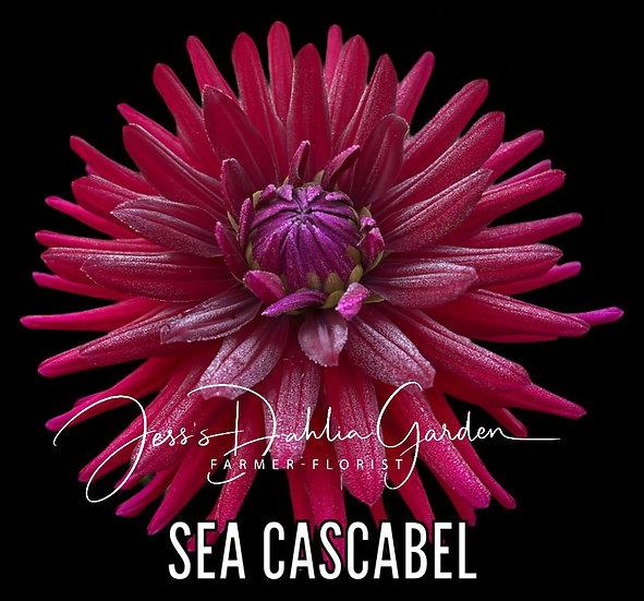 Sea Cascabel